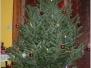 Weihnachtsbaum ( Dezember 2010 )